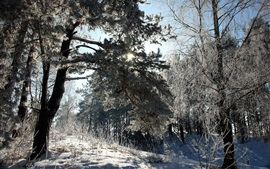 Lithuania, winter, snow, forest, trees