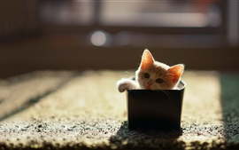 Preview wallpaper Little cat in a box, sunshine