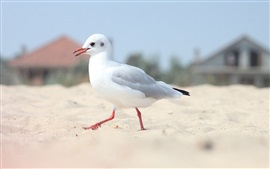 Preview wallpaper Lonely seagull, beach