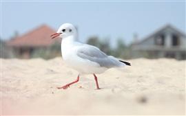Gaviota solitaria, playa