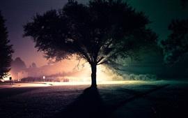 Одинокое дерево, силуэт, свет, ночь