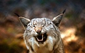Preview wallpaper Lynx yawn, blurry background