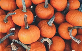 Many pumpkins, vegetables