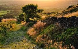 Paisagem da natureza, árvores, grama, manhã, luz do sol