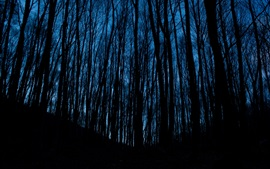 Preview wallpaper Night, forest, trees, darkness