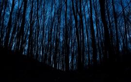 Noite, floresta, árvores, escuridão