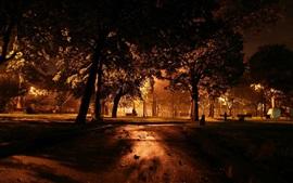 Noite, parque, árvores, luzes, escuro
