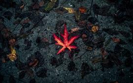 Uma folha de bordo vermelho, chão