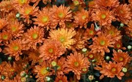 Оранжевые цветы, капли воды