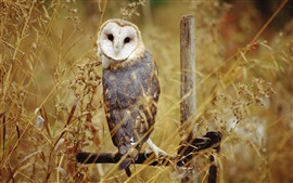 Preview wallpaper Owl standing, grass, autumn