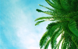 Preview wallpaper Palm tree leaves, blue sky, clouds