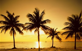 Palm trees, sunset, beach, sea