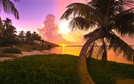 Preview wallpaper Palm trees, sunset, clouds, sea, resort