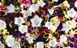 Preview wallpaper Pansies and bells flowers