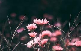 Aperçu fond d'écran Fleurs roses, flou