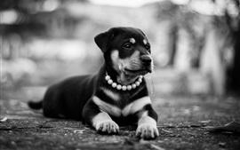 Repos chiot, photo noir et blanc