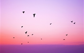 Preview wallpaper Purple sky, birds flight, silhouettes, sunset