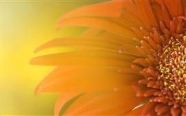 Macro de flor roja, pétalos, fondo borroso