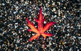 Red maple leaf, cobblestones, autumn