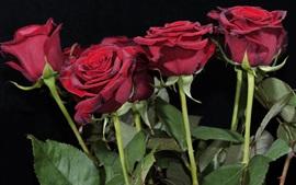 Flores de rosas vermelhas, fundo preto