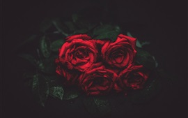 Preview wallpaper Red roses, water drops, darkness