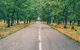 Road, forest, trees, leaves, autumn