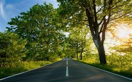Aperçu fond d'écran Route, arbres, soleil
