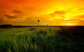 Savanna, grass, sunset, clouds