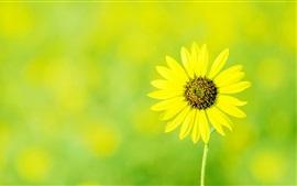 Fleur jaune unique, printemps, bokeh