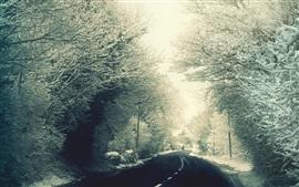 Nieve, árboles, camino, invierno