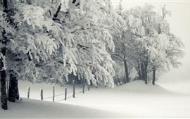 預覽桌布 雪,樹,冬天,白色的世界