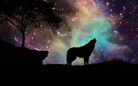 Preview wallpaper Starry, wolf, sky, silhouette, art design