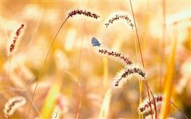 壁紙のプレビュー 夏、草、蝶
