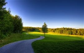 여름, 나무, 잔디, 잔디, 녹색, 경로