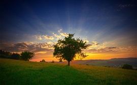 Preview wallpaper Sunlight, trees, fields, sunset