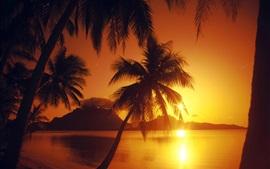 Puesta de sol, mar, palmeras, resplandor, rayos del sol