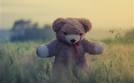 Preview wallpaper Toy, teddy bear, grass