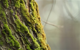 Vorschau des Hintergrundbilder Baumrinde, Moos