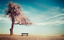 Árbol, banco, hierba, otoño