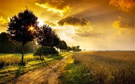 Preview wallpaper Trees, fields, path, grass, sunrise
