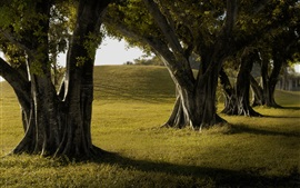 Preview wallpaper Trees, grass, shadow