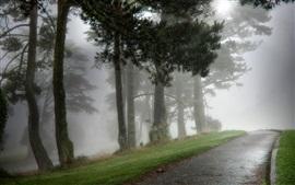 Árboles, camino, niebla, mañana