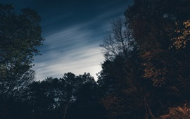 Trees, sky, dusk, night