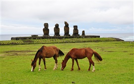 Two brown horses, grass, stones, sea