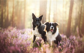 Two dogs in the nature, wildflowers