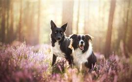 Dos perros en la naturaleza, flores silvestres