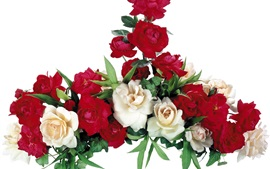 Preview wallpaper White and red roses, white background