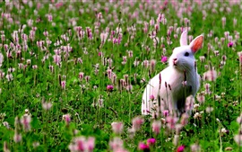 Preview wallpaper White bunny in the flowers