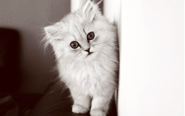 Preview wallpaper White fluffy kitten, wall, sofa
