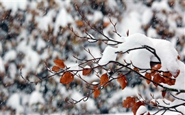 Preview wallpaper White snow, twigs, yellow leaves, snowy, winter